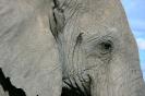Serengeti_18