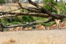 Serengeti_21