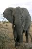 Serengeti_24