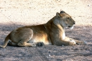 Serengeti_26