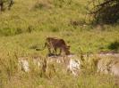 Serengeti_4