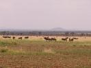 Serengeti_5